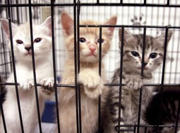 40-Pictures-of-Animals-in-Shelter-3
