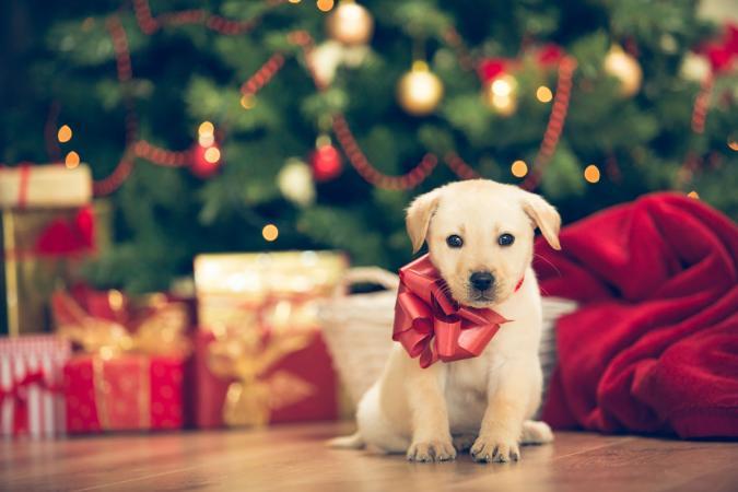 Kerst-hond