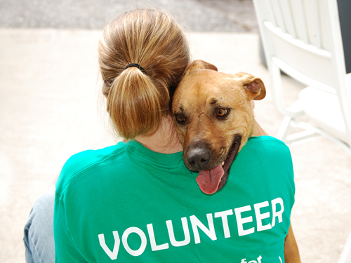vonunteer-with-dog-at-an-animal-shelter